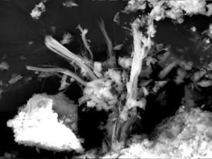 Chrysotilasbest in einer Asbestzementplatte im REM